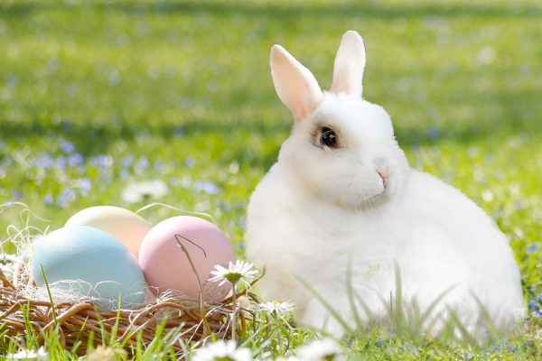 easter-bunny-